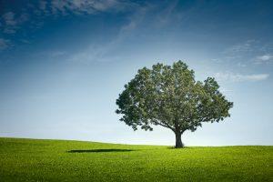 O fazendeiro e a árvore que não deu frutos