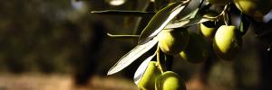 Os nove frutos do Espírito Santo