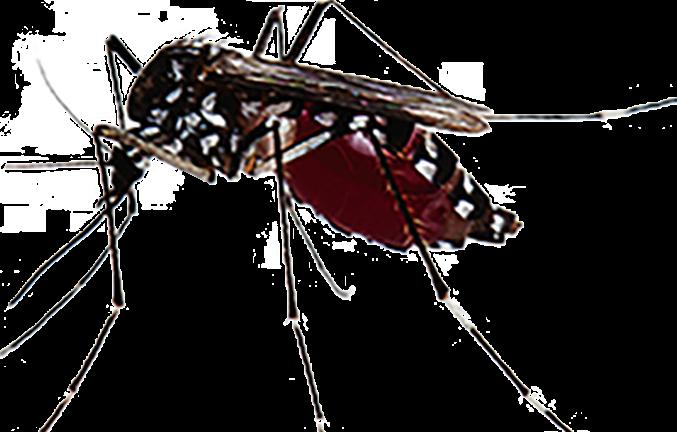 Casos de dengue  aumentaram  599,5% em relação ao ano passado