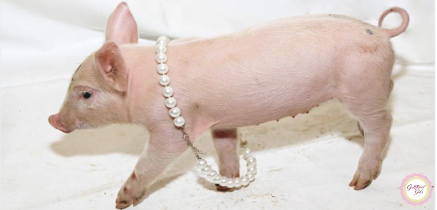 Joia de ouro em focinho de porco, combina?