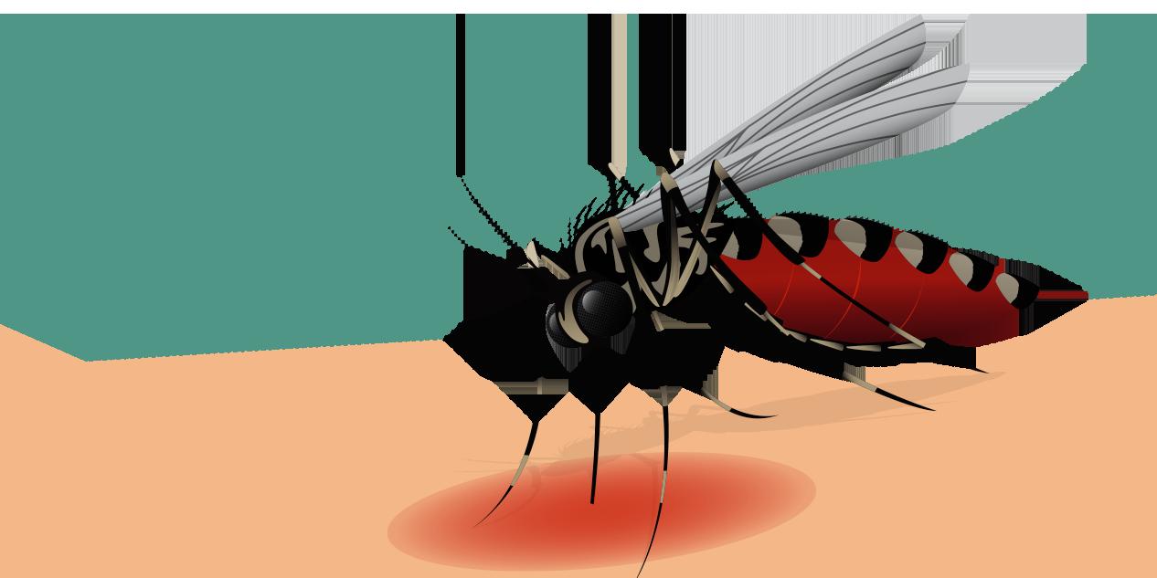 O que você não sabe sobre a chikungunya