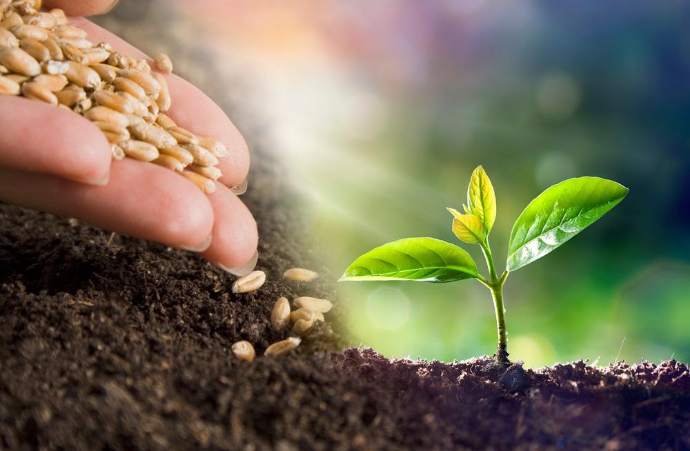 Tudo o que semear colherá
