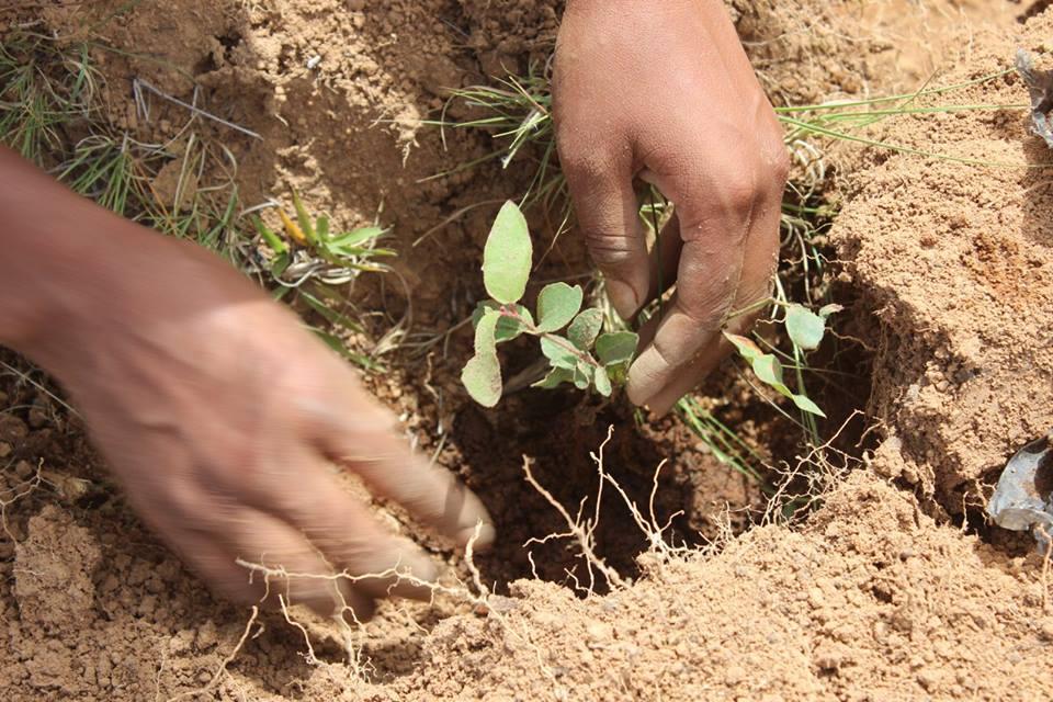 FJU organiza plantio de mudas em Madagascar1 min read