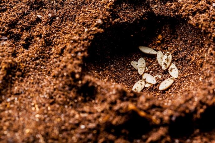 As sementes que matam5 min read