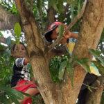 Crianças brincam em árvore