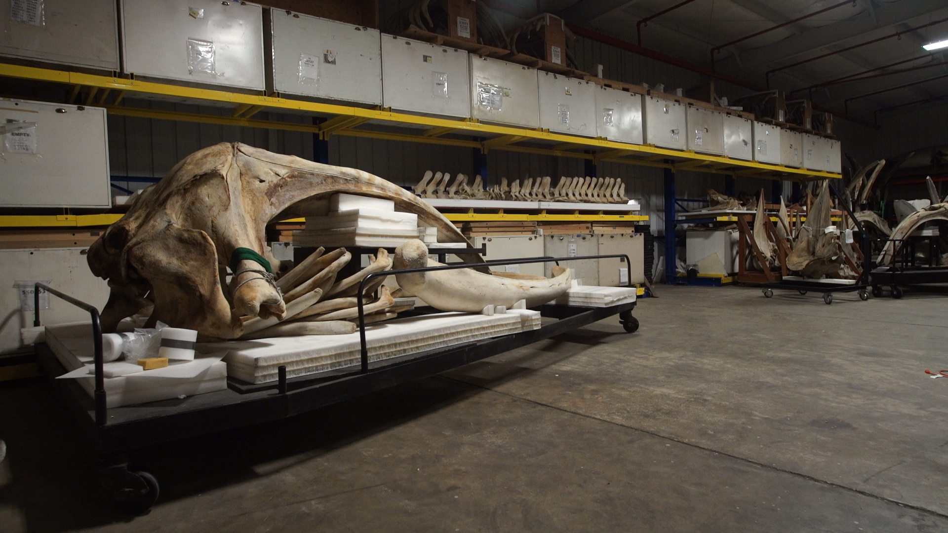 In a warehouse in maryland a monument to whales past the washington post