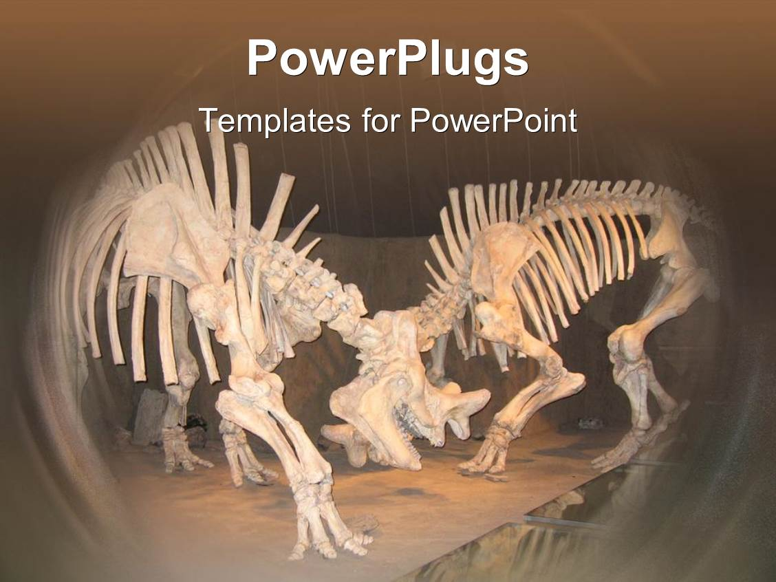 5000 museum powerpoint templates w museum themed backgrounds colorful slide deck having 2 dinosaur skeletons with bones museum archaeology paleontology template size toneelgroepblik Choice Image