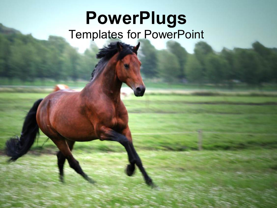 Horse powerpoint templates ppt themes with horse backgrounds theme enhanced with brown and black horse running on a green field with green trees and toneelgroepblik Choice Image
