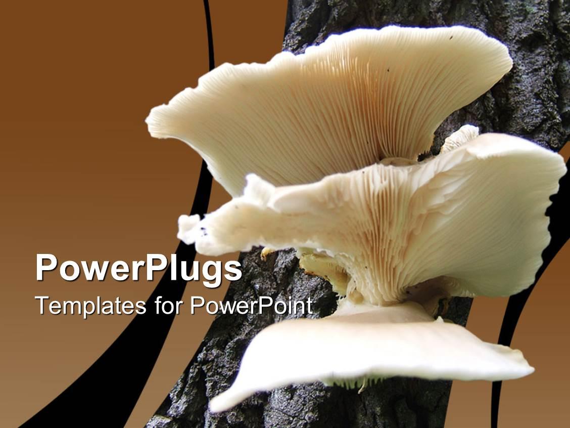 5000 mushroom powerpoint templates w mushroom themed backgrounds ppt theme having a close look of mushroom template size toneelgroepblik Image collections