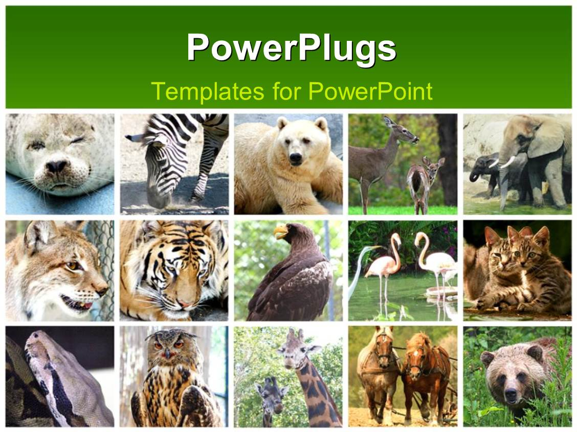Powerpoint template fifteen tiles with different animals in twos powerpoint template displaying fifteen tiles with different animals in twos and threes alramifo Choice Image