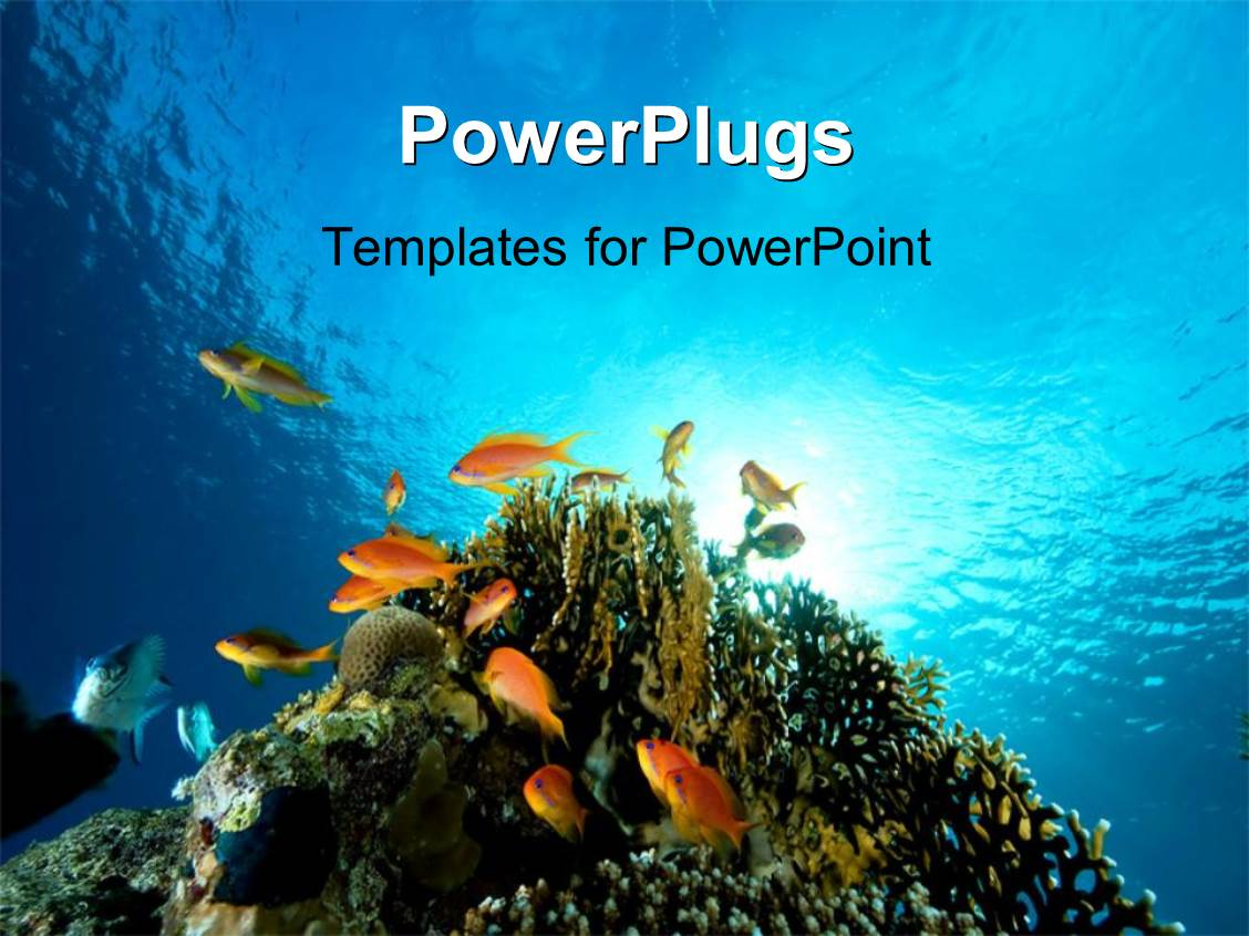 Powerpoint template underwater coral reef ocean with shark and colorful presentation theme having floor bed of red sea with coral and fish swimming toneelgroepblik Choice Image