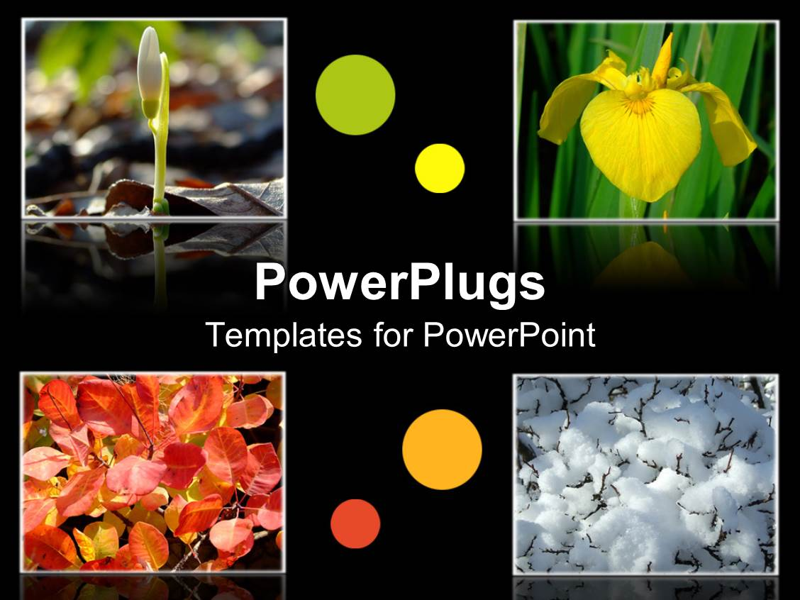 PowerPoint Template Displaying Four Tiles with Different Flowers on a Black Background