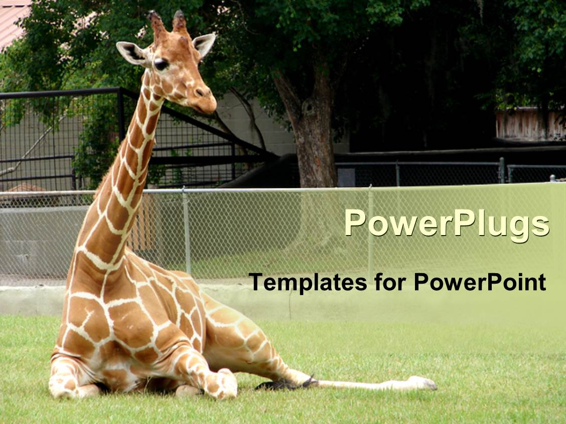 5000 zoo powerpoint templates w zoo themed backgrounds audience pleasing presentation theme featuring giraffe relaxing in front of tree at zoo toneelgroepblik Images