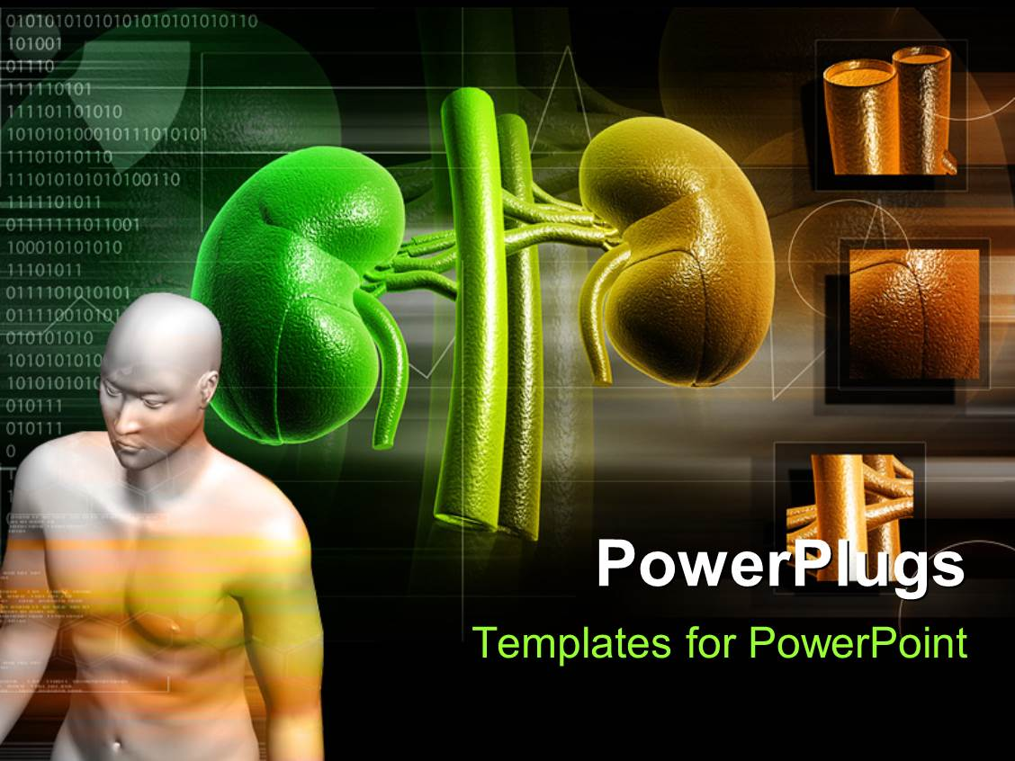 3000 kidney medical powerpoint templates w kidney medical themed ppt theme having human anatomy with kidney structure in background toneelgroepblik Image collections