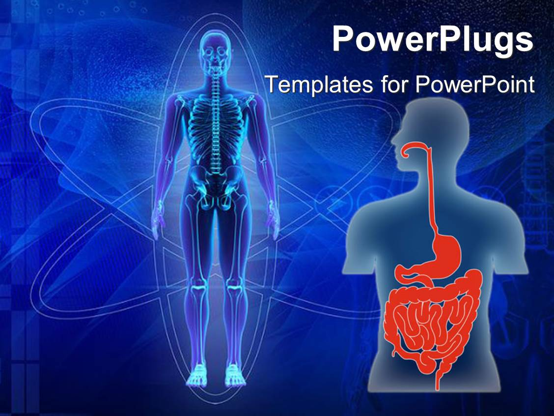 Top human body powerpoint templates backgrounds slides and ppt ppt theme consisting of human body showing skeleton and human torso with digestive tract in red template size toneelgroepblik Images