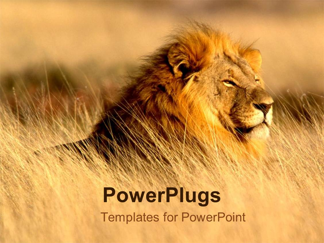 Powerpoint template lion in desert top of the food chain power powerpoint template displaying lion in desert top of the food chain power animals alramifo Choice Image