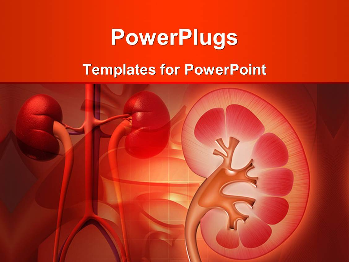 5000 kidney powerpoint templates w kidney themed backgrounds ppt theme having medical theme with kidney and other human organs on red color background toneelgroepblik Images