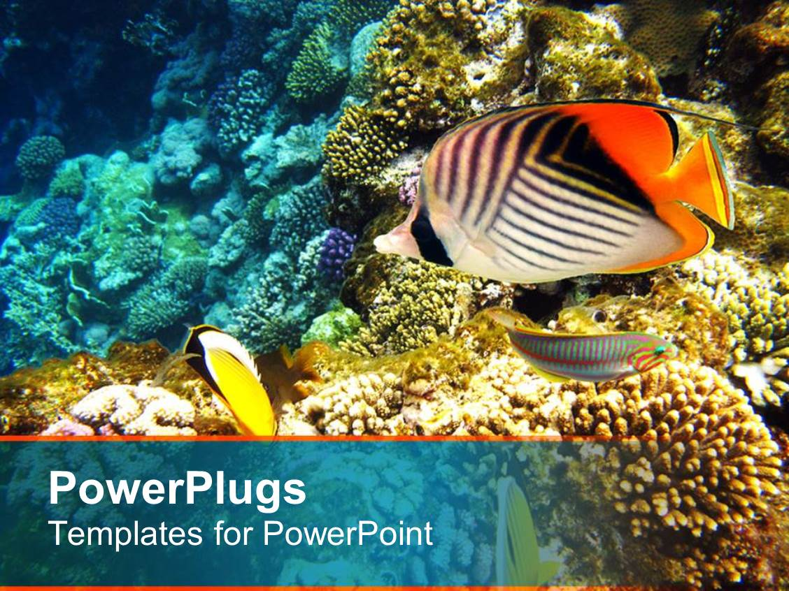 Coral PowerPoint Templates | PPT Themes with Coral Backgrounds