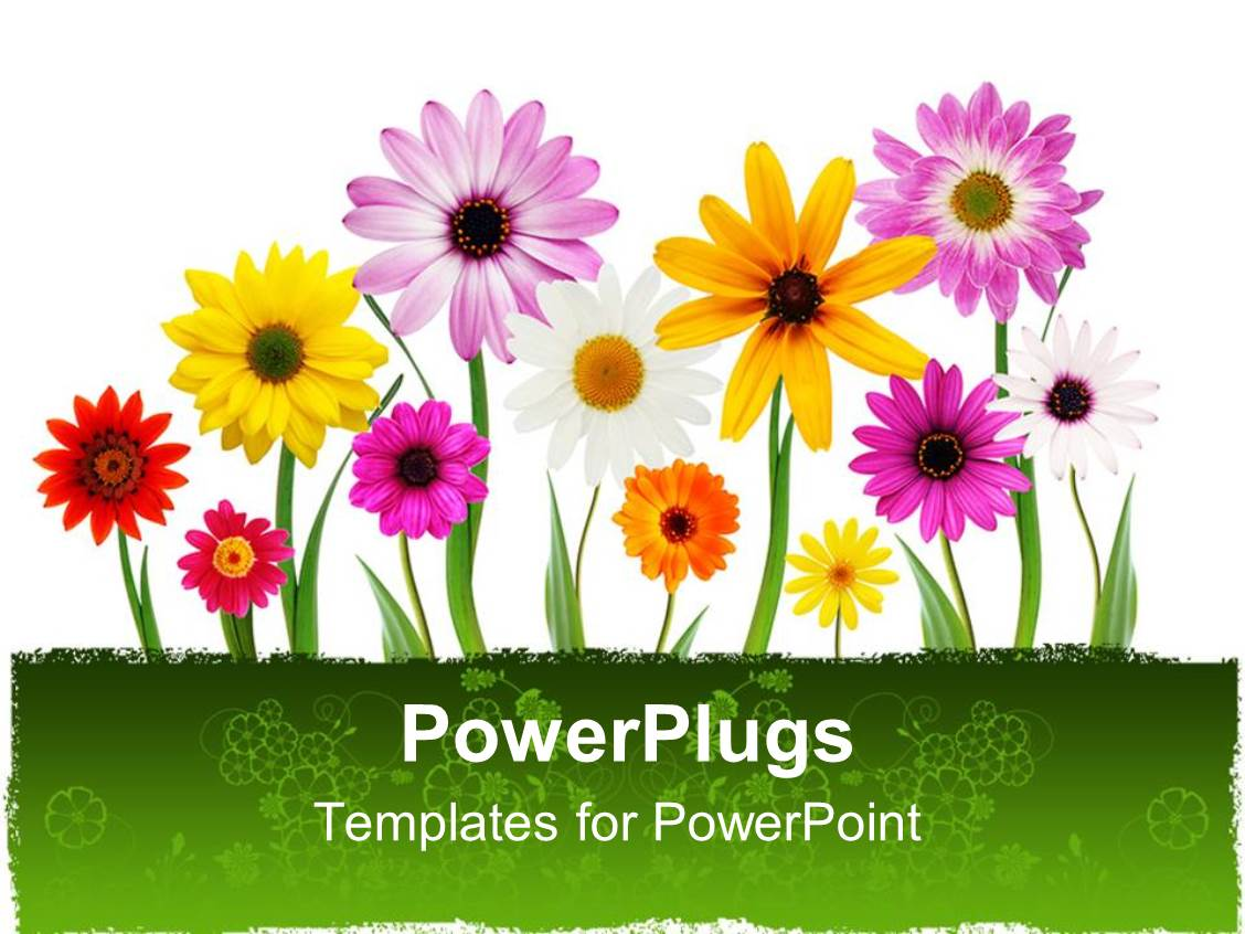 Elegant PPT Layouts Enhanced With A Number Of Colorful Flowers With White  Background Template Size