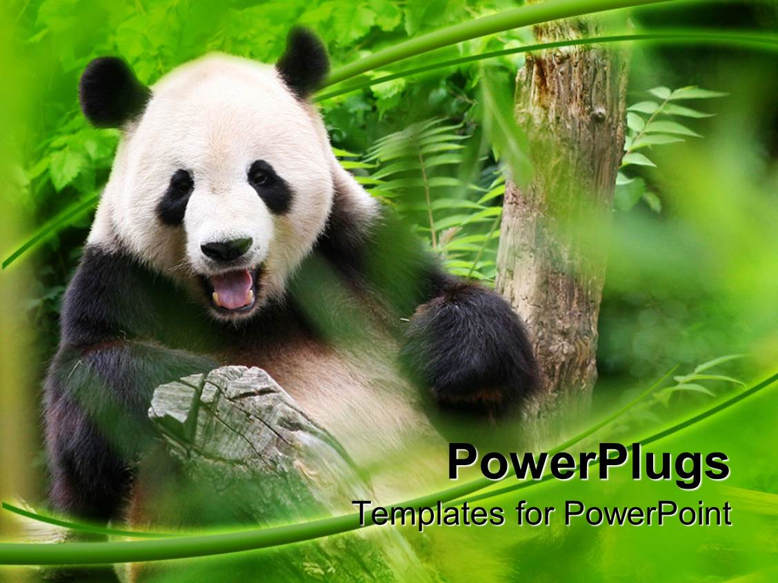 4000 panda powerpoint templates w panda themed backgrounds theme featuring panda is smiling in a zoo surrounded by greenery template size toneelgroepblik Gallery