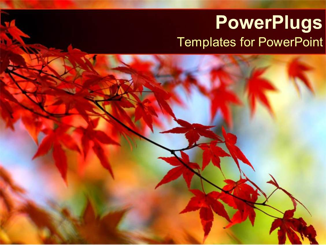 PowerPoint Template Displaying Red Leaves on Orange Tree in Autumn with a Blue Sky