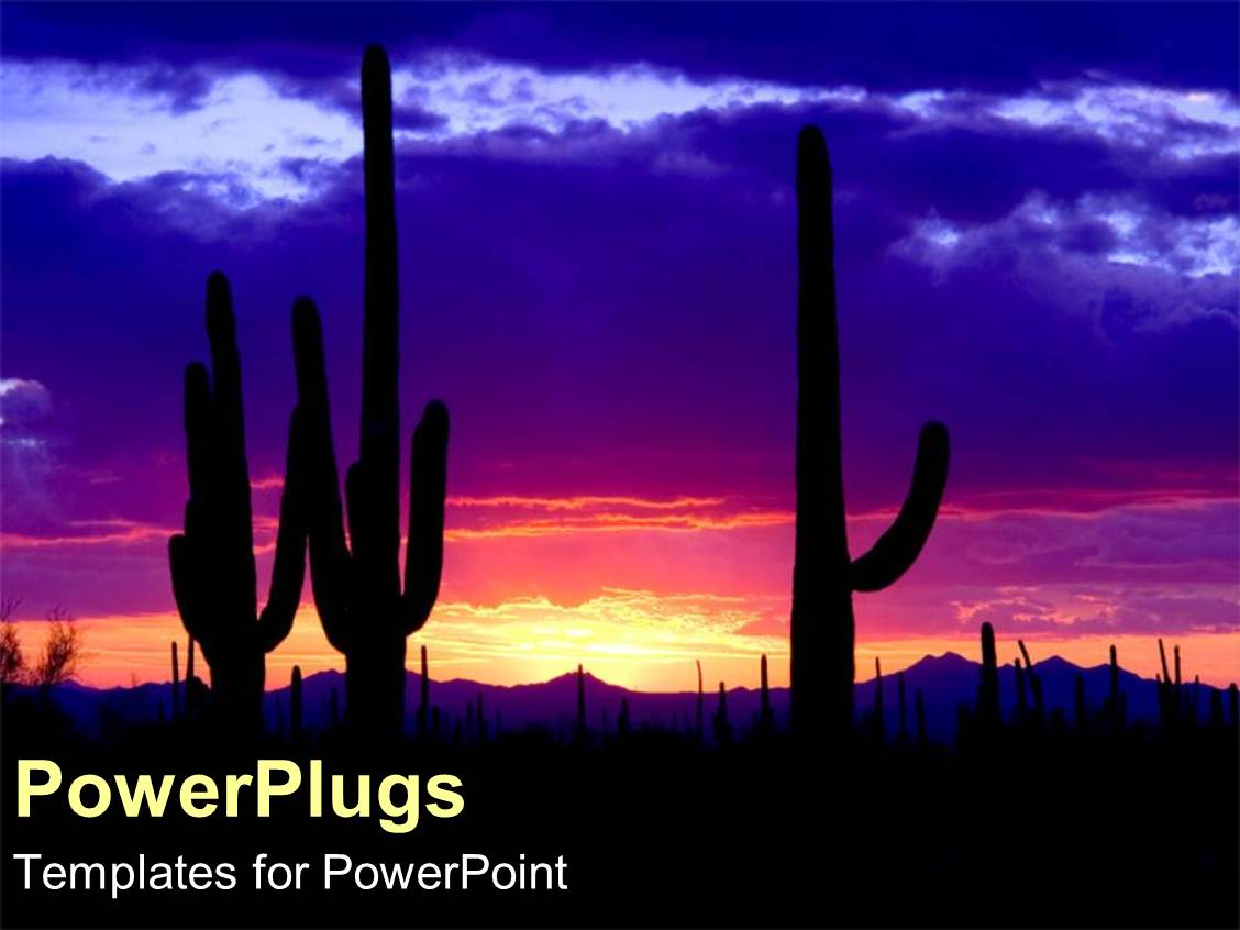 Powerpoint template camels and desert merchants travelling through presentation featuring silhouette of cacti cactus at night in desert with sunset pink blue toneelgroepblik Choice Image