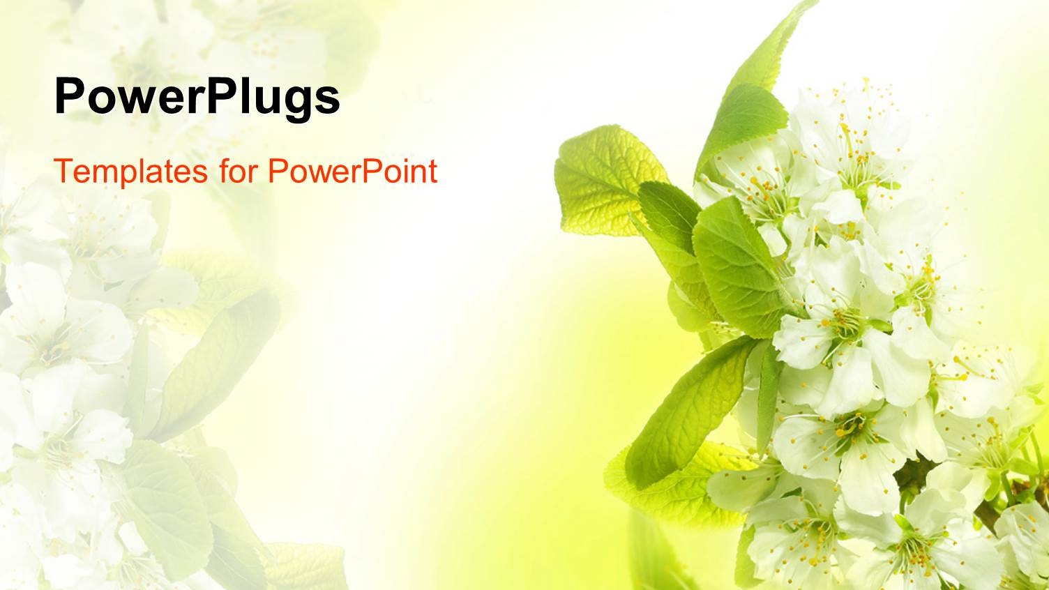 5000 spring powerpoint templates w spring themed backgrounds ppt layouts consisting of spring blossoms with white flowers and green leaves template size toneelgroepblik Images