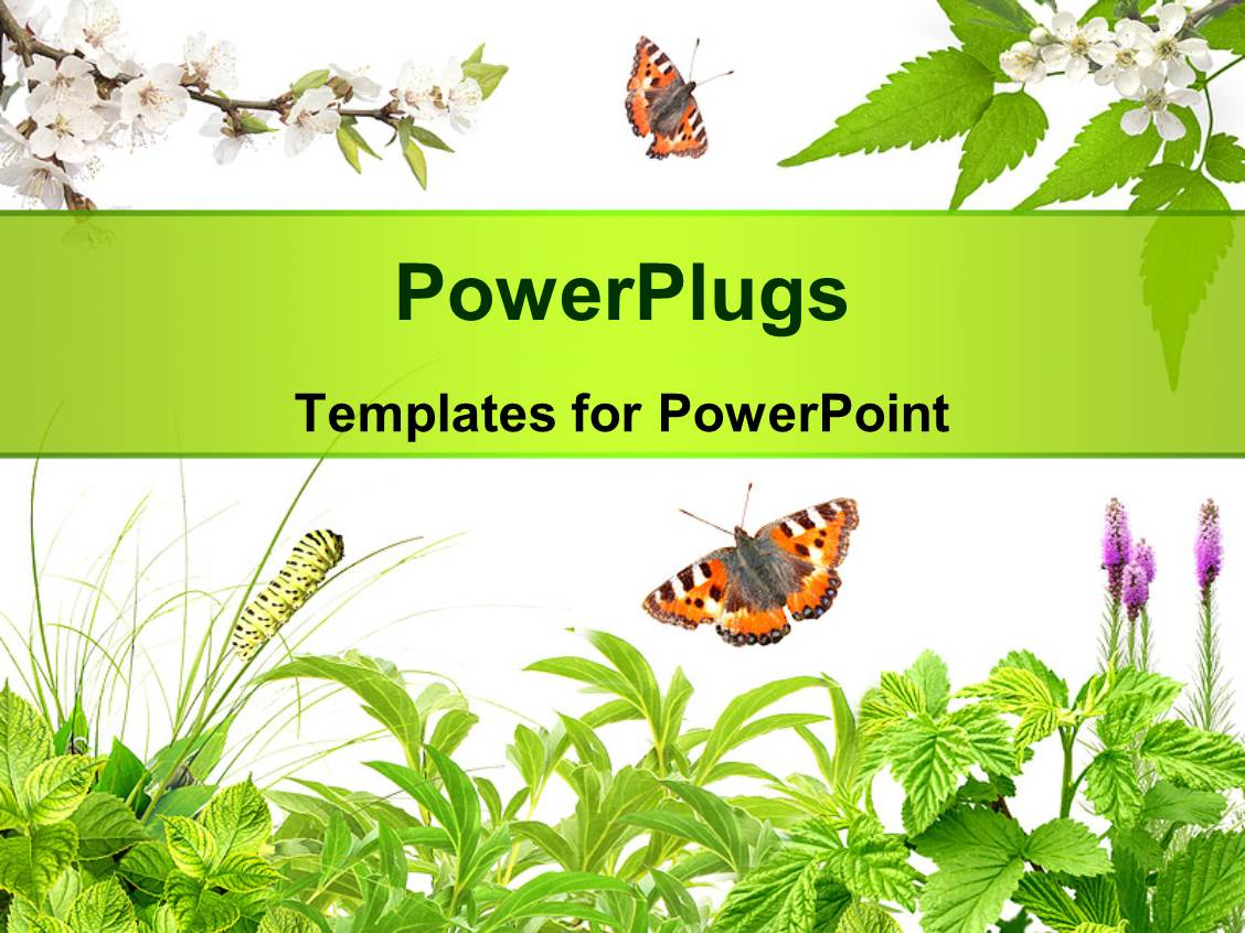 5000+ Insect PowerPoint Templates w/ Insect-Themed Backgrounds
