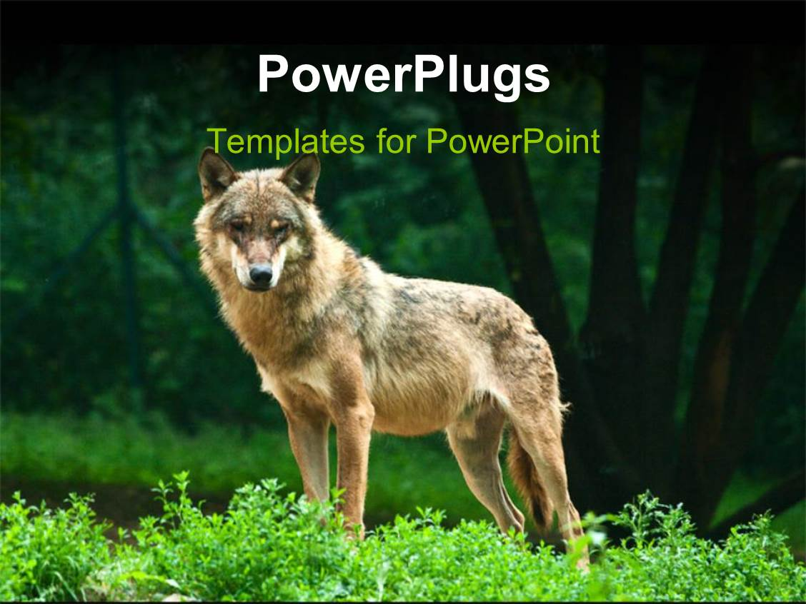 Powerpoint template a wolf standing alone with greenery in the powerpoint template displaying a wolf standing alone with greenery in the background alramifo Choice Image