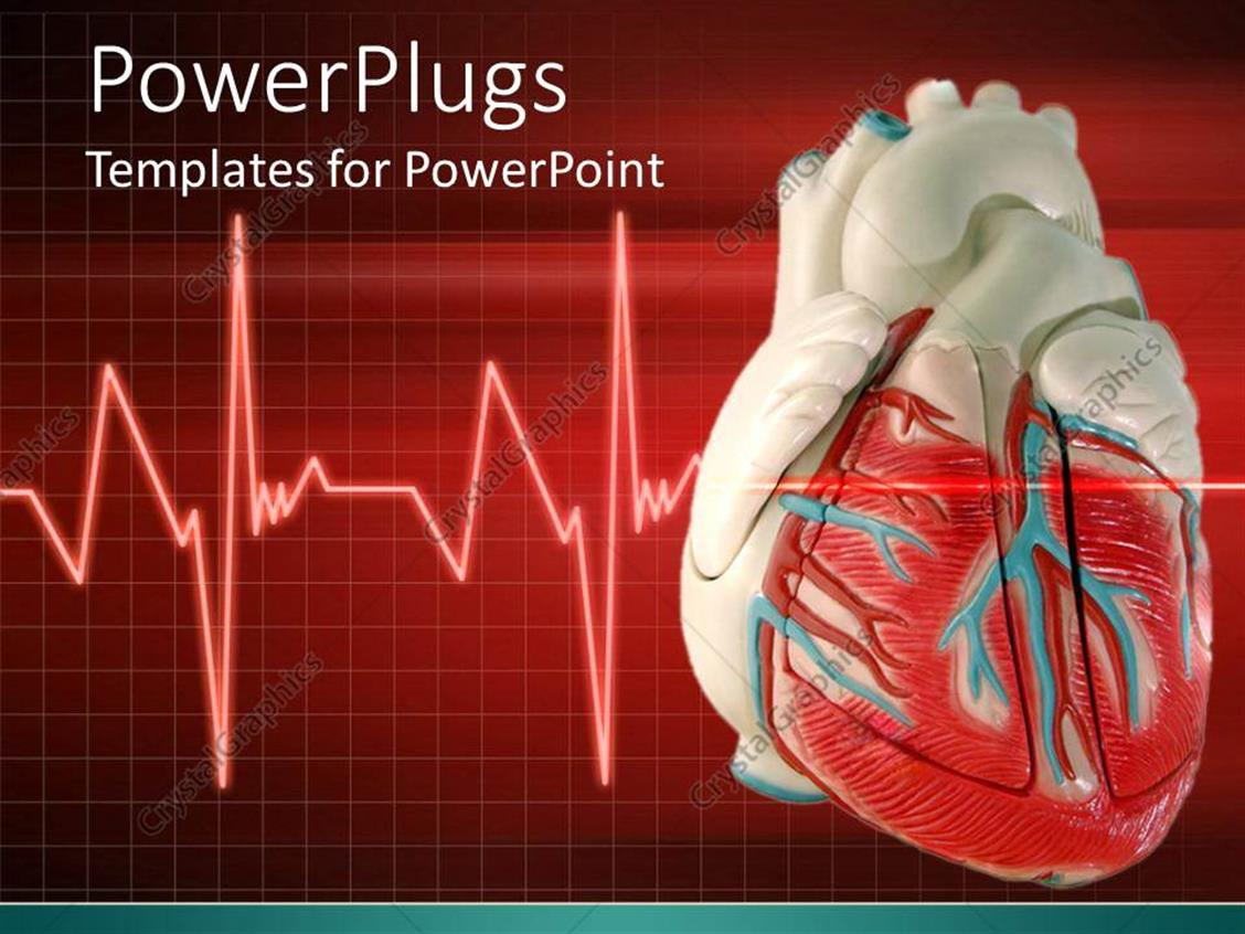 cardiovascular powerpoint template free - powerpoint template a 3d heart with an eco cardiogram