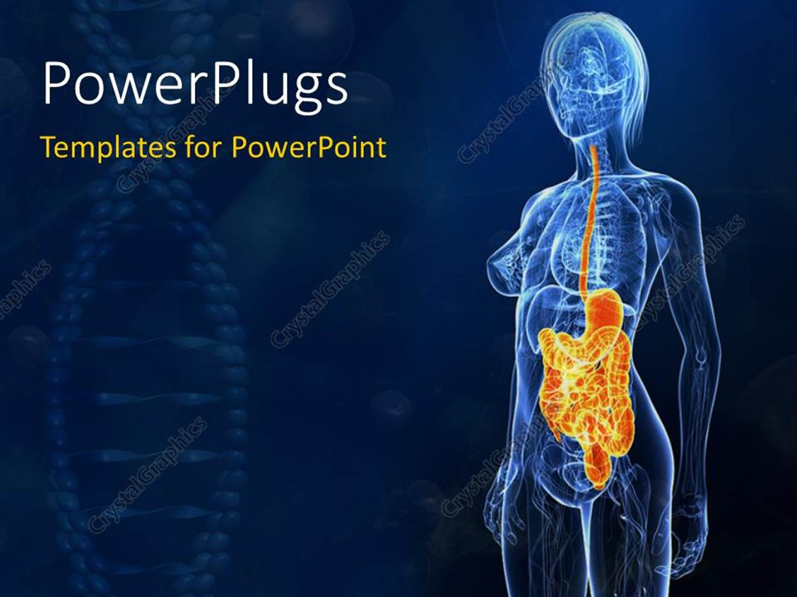 Powerpoint Template The Anatomy Of A Human Being With Bluish