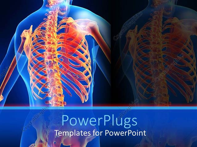 Powerpoint template an anatomy of a human skeletal system of the powerpoint template displaying an anatomy of a human skeletal system of the back toneelgroepblik Images