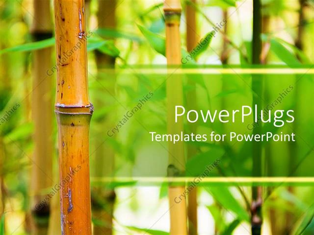 powerpoint template bamboo canes with green leaves in a nature