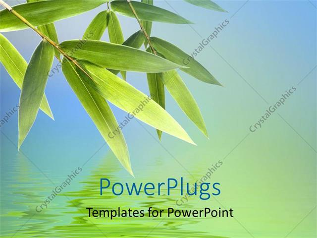 powerpoint template bamboo leaves with reflection on water surface