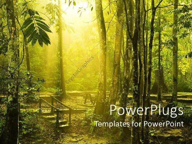 powerpoint template  beautiful morning sunlight shine into
