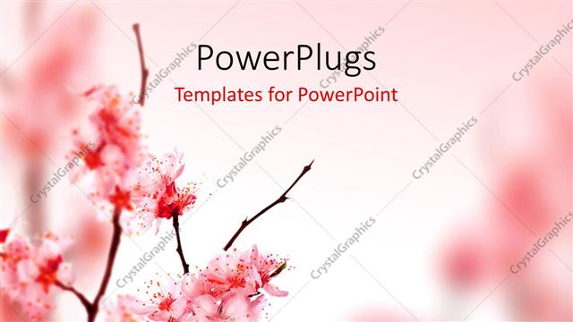 Powerpoint template beautiful spring blossom in pink 27218 powerpoint template displaying beautiful spring blossom in pink toneelgroepblik Choice Image