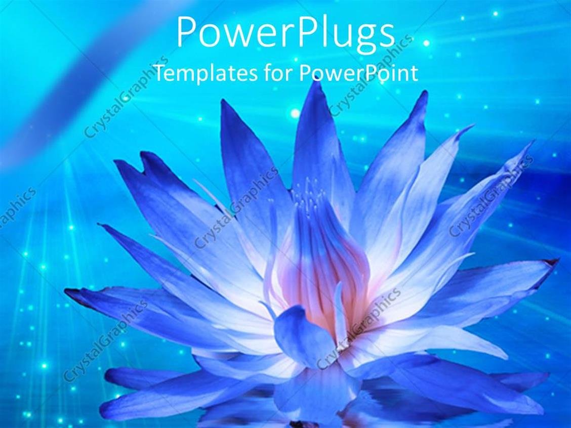 Powerpoint Template Big White And Blue Lotus Flower On A Blue