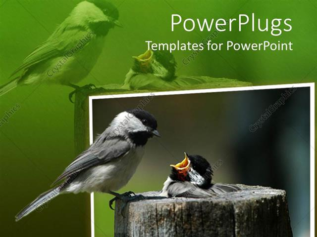 PowerPoint Template Displaying a Bird Feeding its Child Along with their Reflection in the Background