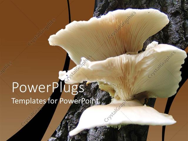 Powerpoint template a close look of mushroom 20901 powerpoint template displaying a close look of mushroom toneelgroepblik Gallery