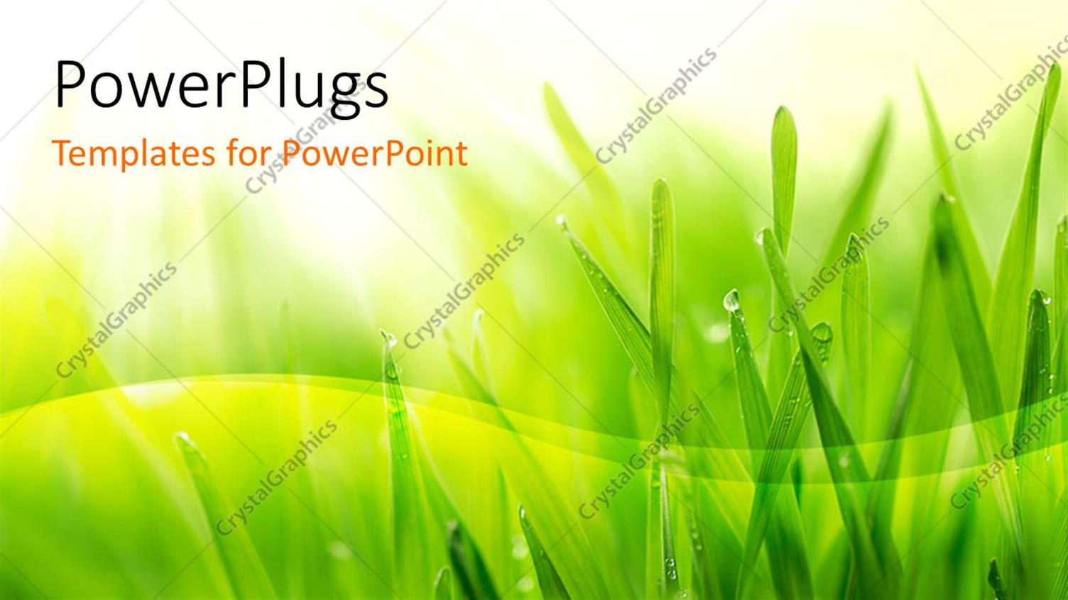 PowerPoint Template Displaying Close Up of Grass Covered with Morning Dew on Yellow and White Background