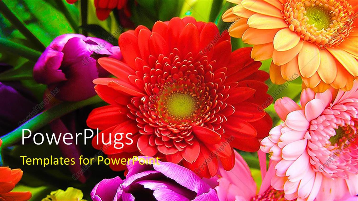 PowerPoint Template Displaying a Number of Colorful Flowers with Place for Text