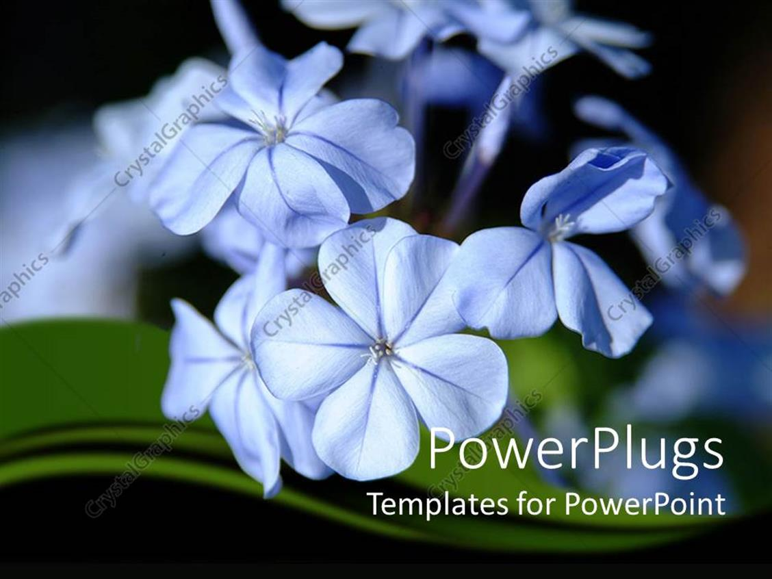 Powerpoint Template Close Up Of Tiny Blue Flowers In Moonlight 12606
