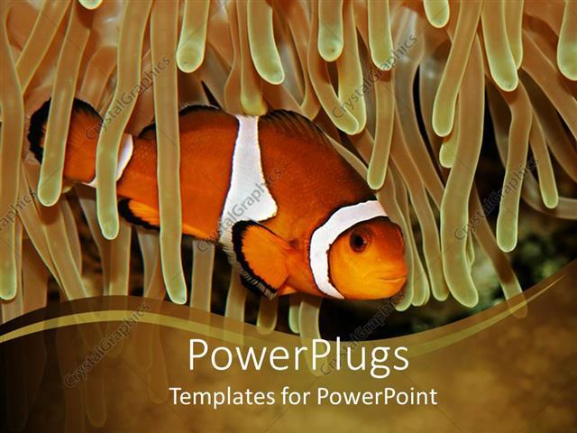 powerpoint template clown fish swimming through anemone on khaki