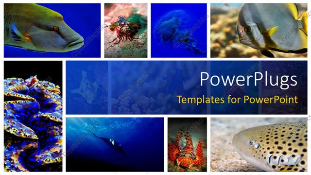 Powerpoint template a number of figures related to sea life in the powerpoint template displaying a number of figures related to sea life in the picture toneelgroepblik Images