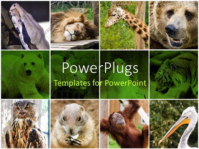 Powerpoint Template Collage Depiction Of Some Wild Animals