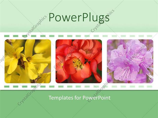 PowerPoint Template Displaying Collage of Three Depictions of Beautiful Colorful Flowers, Yellow, Red, Purple Flowers