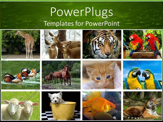 PowerPoint Template Displaying Collage