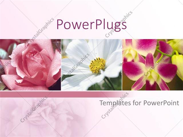 PowerPoint Template Displaying a Collection of Different Kinds of Flowers  with Pinkish Background