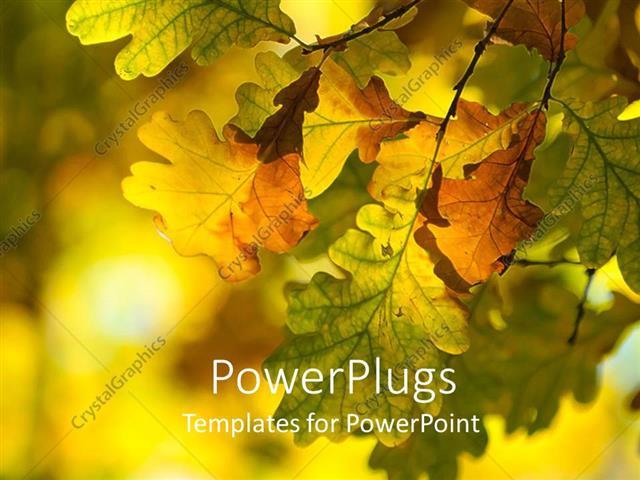 Powerpoint template colorful autumn leaves on a tree on a colorful powerpoint template displaying colorful autumn leaves on a tree on a colorful background toneelgroepblik Images