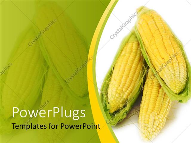 powerpoint template corn on the cob 8427